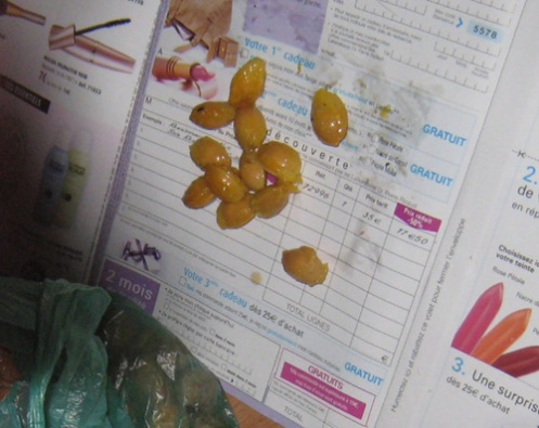 peeling-gingko-stones.jpg