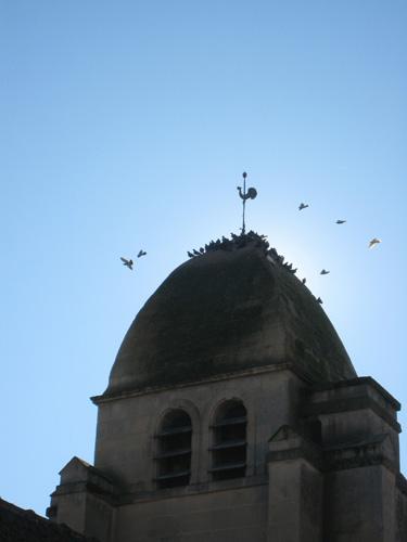 birdsonchurch.jpg