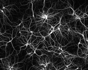 neuron net